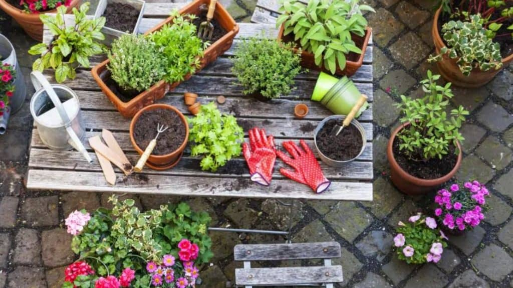 These Two Unique Garden Tools You Cannot Miss Out
