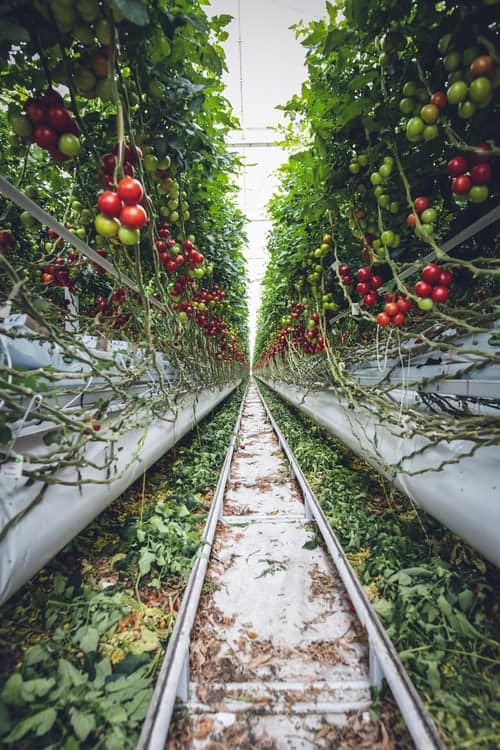 Natural Methods And Advantages Of Organic Gardening